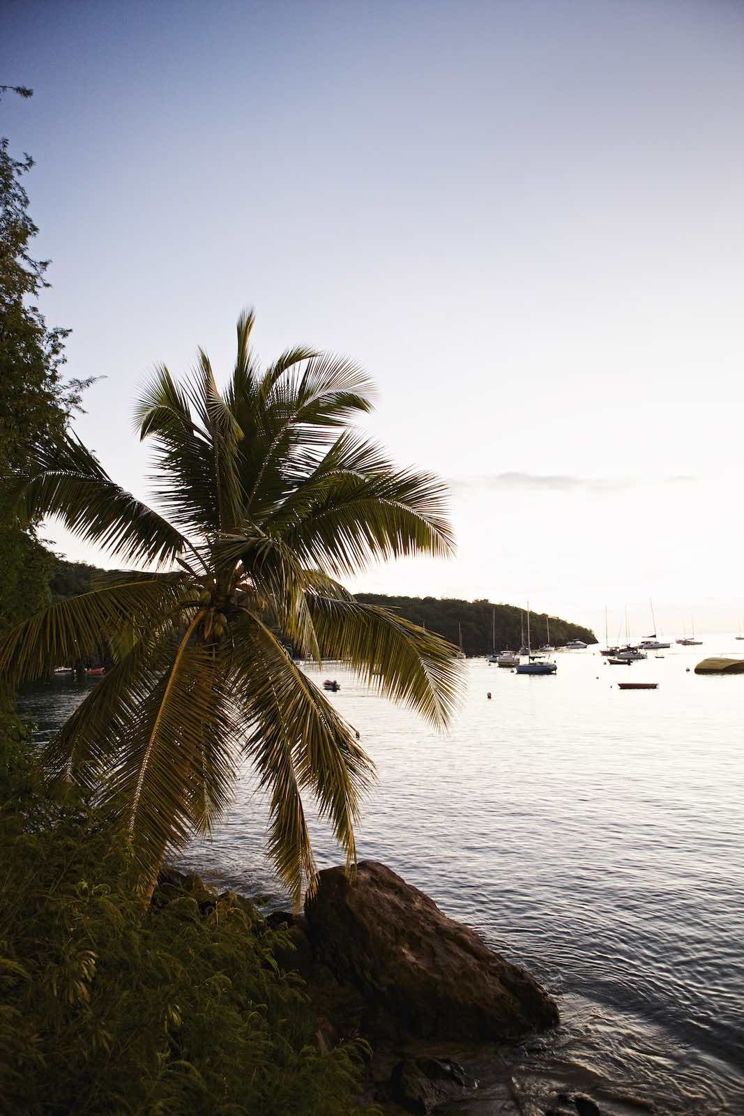 Jody Horton Photography - Palm tree on the beach of a cove with idle sailboats.