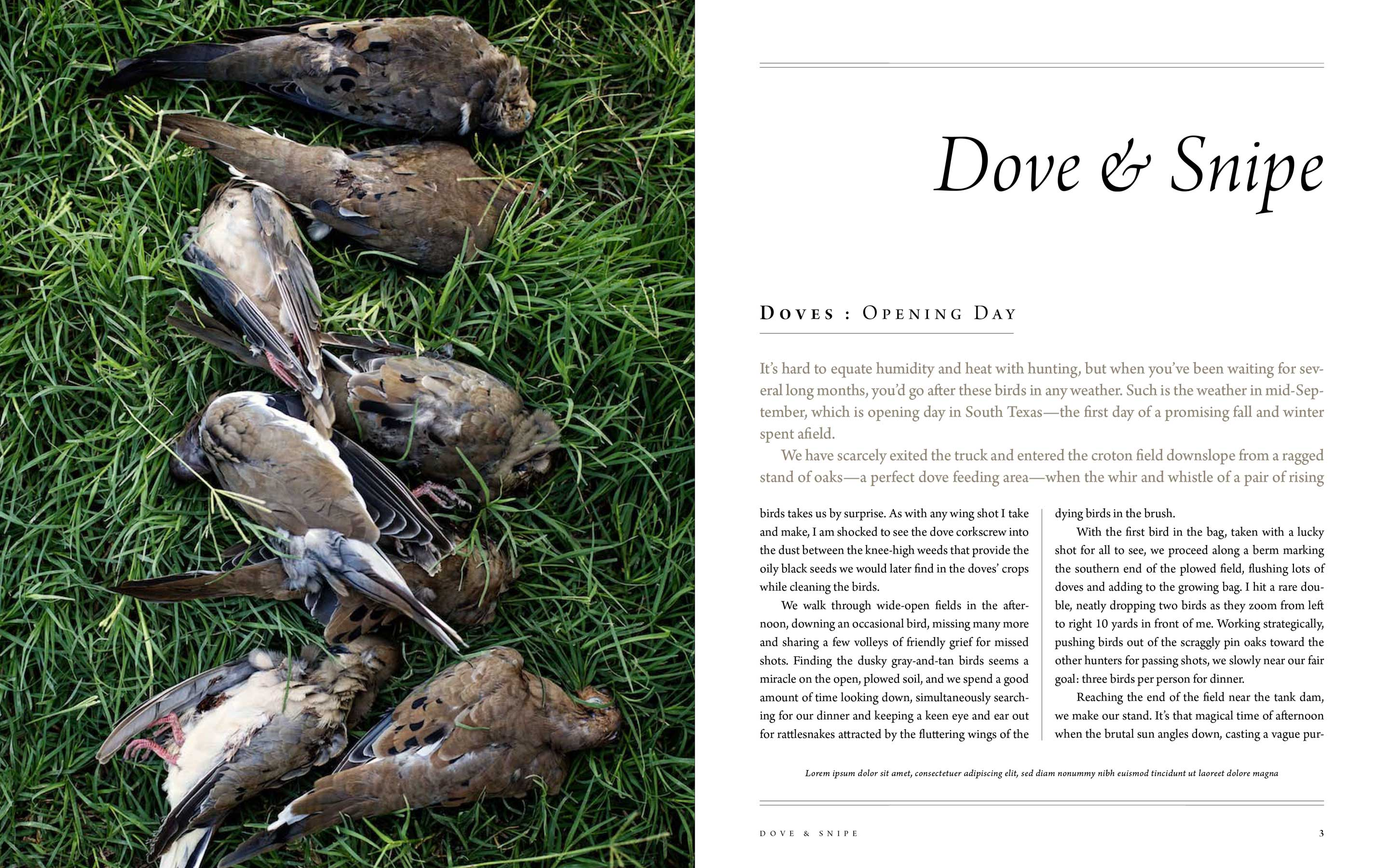 "Jody Horton Photography - ""Dove & Snipe"" for Afield book; doves lying dead in grass."