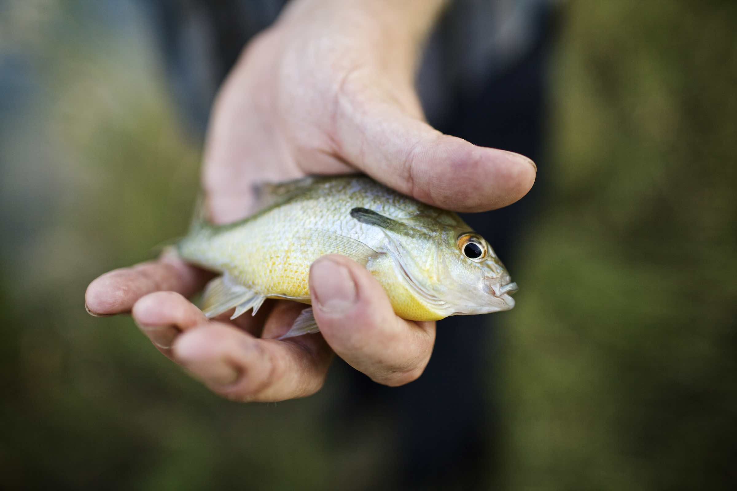 Jody Horton Photography - Hand presenting a small fish.