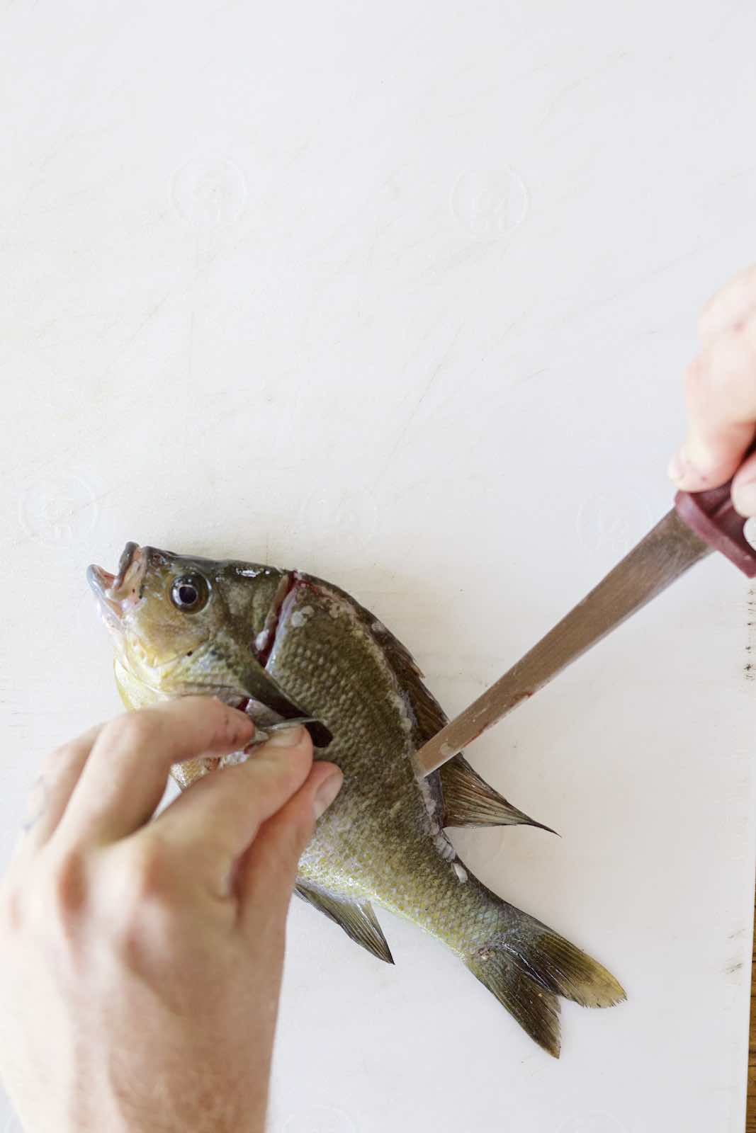 Jody Horton Photography - Small fish filleted with a thin knife.