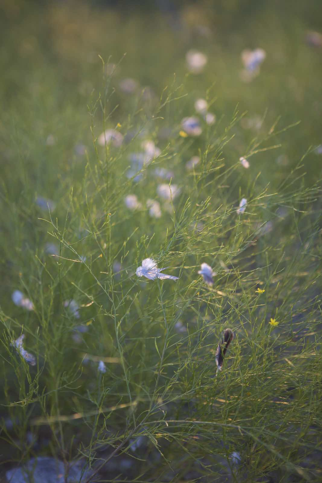 Jody Horton Photography - Wildflowers.