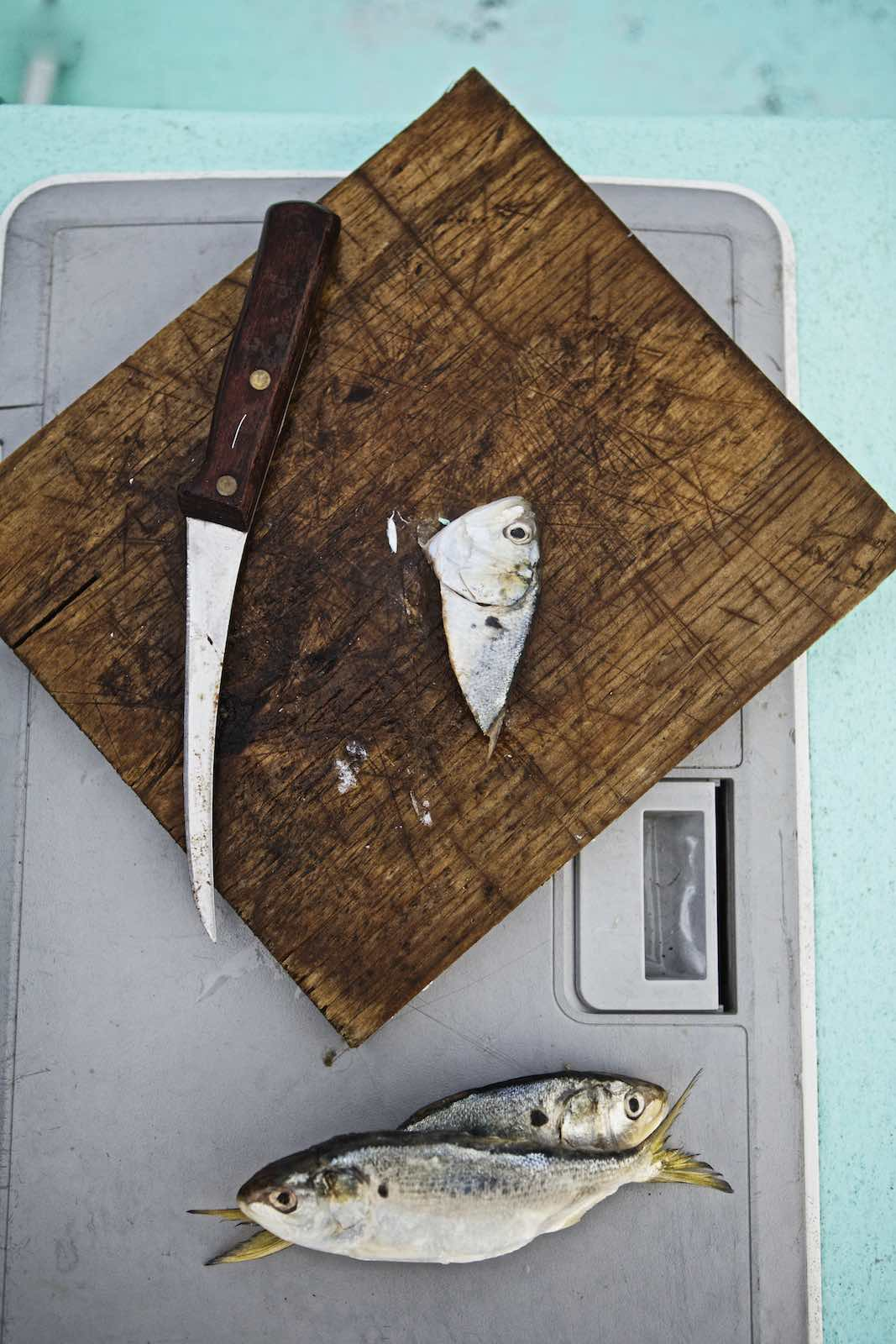Jody Horton Photography - Lone fish head on a wood cutting board.