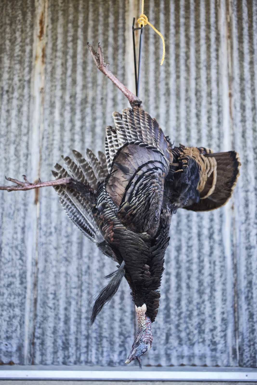 Jody Horton Photography - Turkey hanging by its leg.