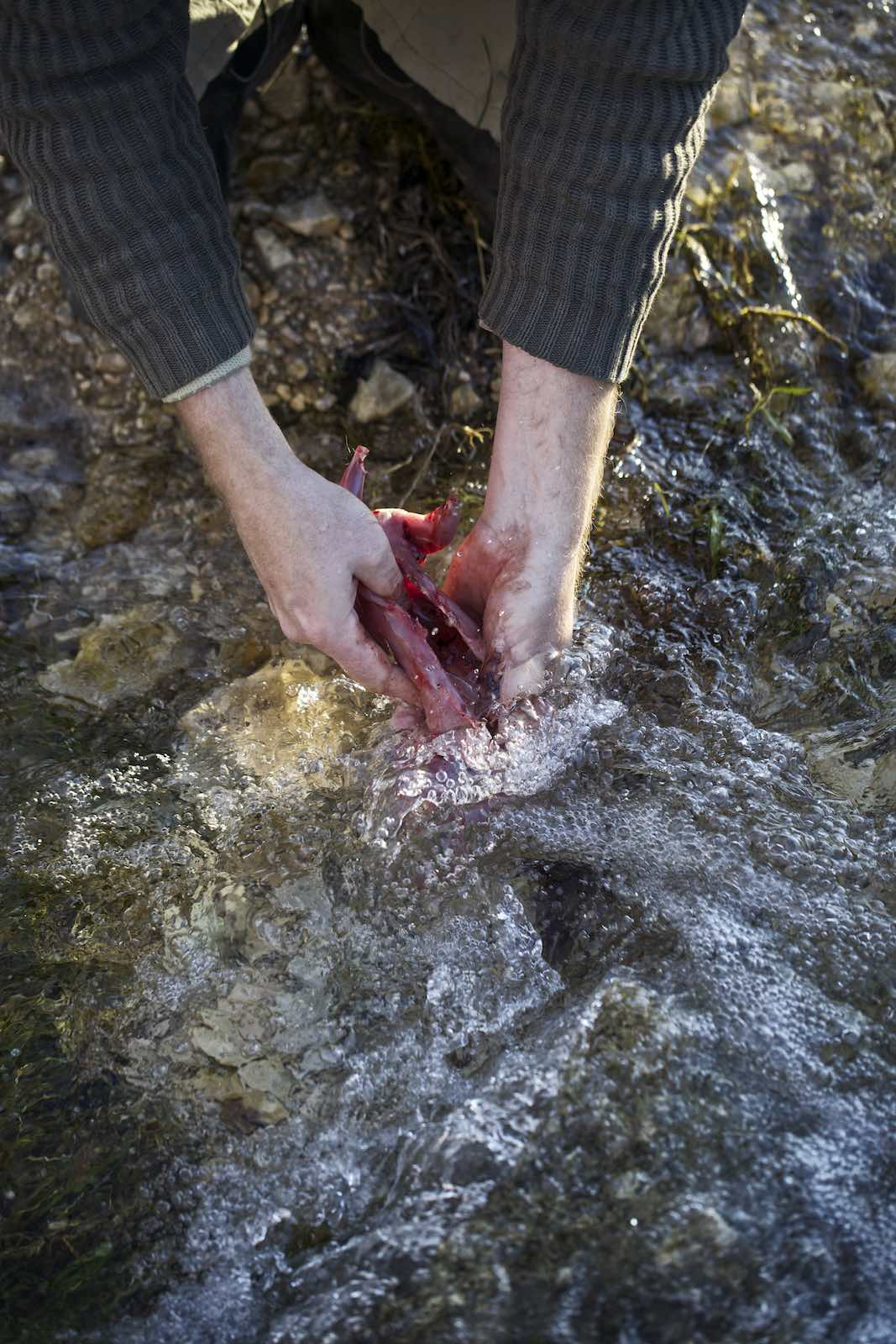 Jody Horton Photography - Hands washing a skinned animal in a stream.