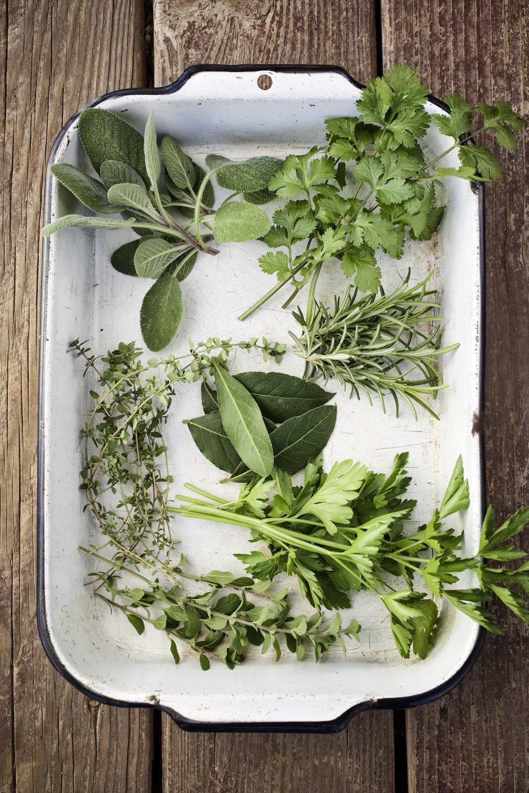 Jody Horton Photography - Assorted fresh herbs in a tin pan.