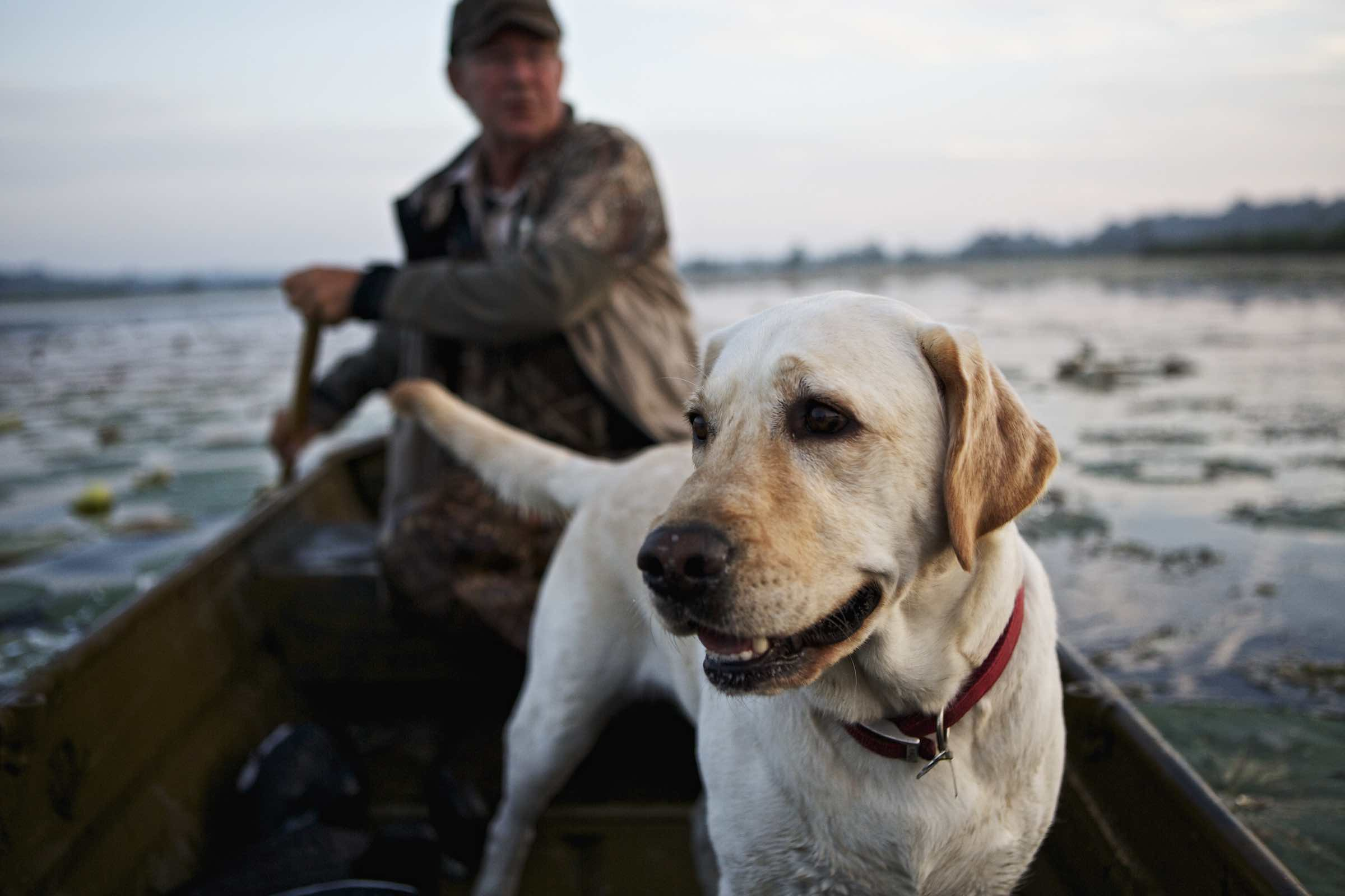 Hunter and his yellow lab rowing across the water.