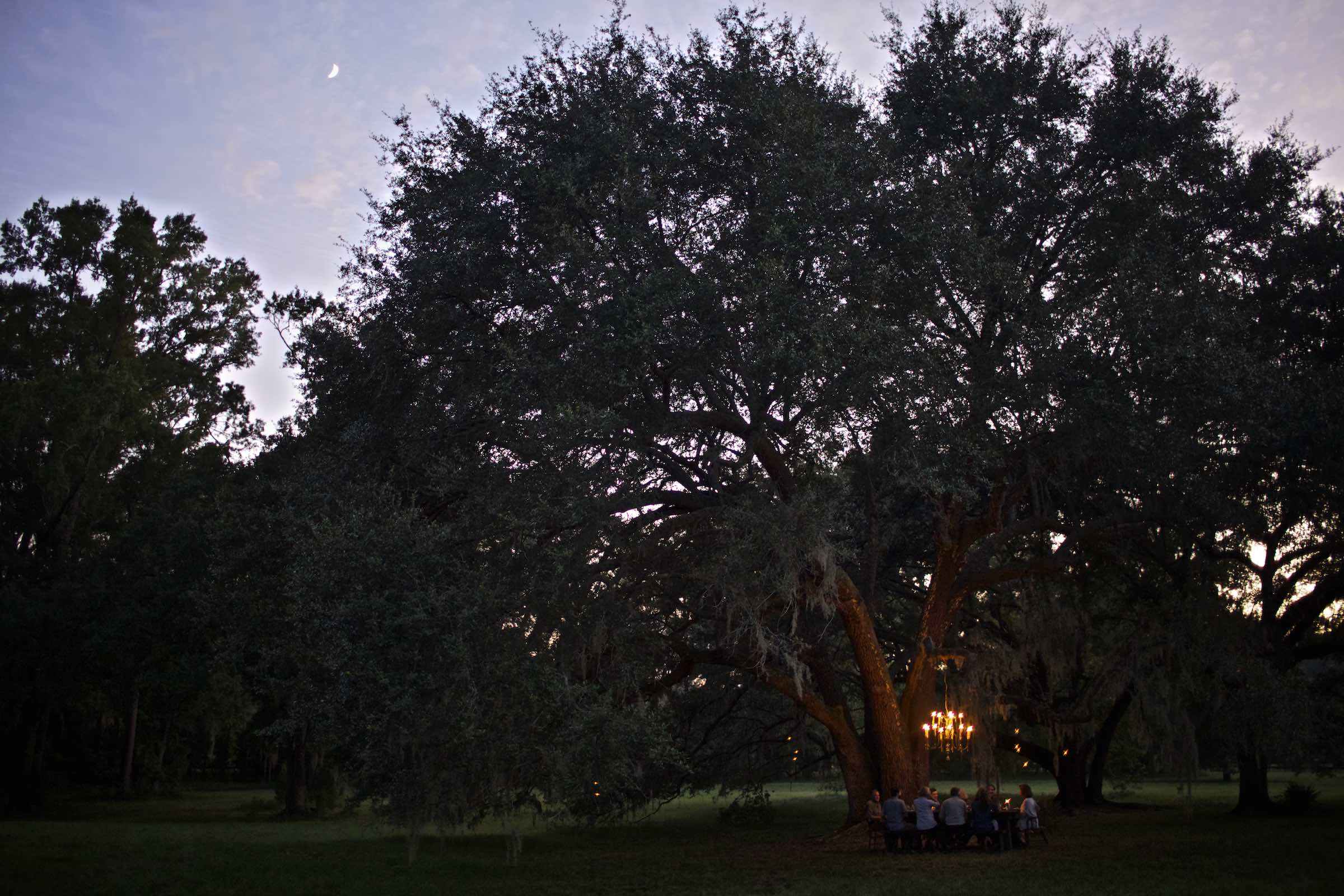 Evening dinner scene lit by a vintage chandelier hanging from a live oak tree.