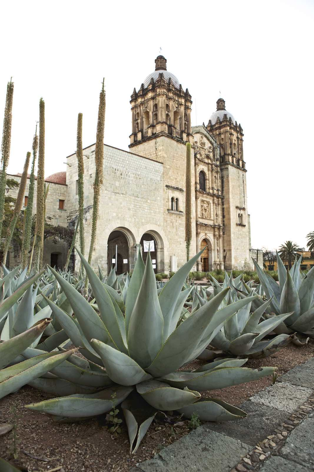 Jody Horton Photography - Large agaves and historic buildings.