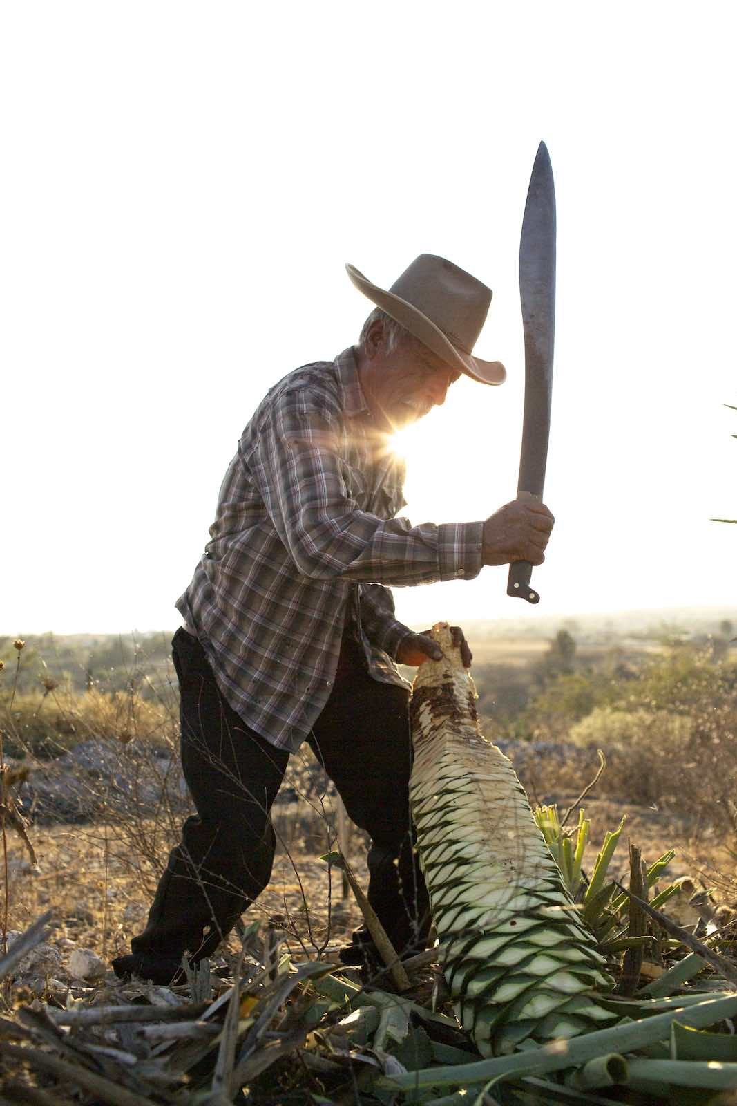 Jody Horton Photography - Farmer using machete to cut agaves.