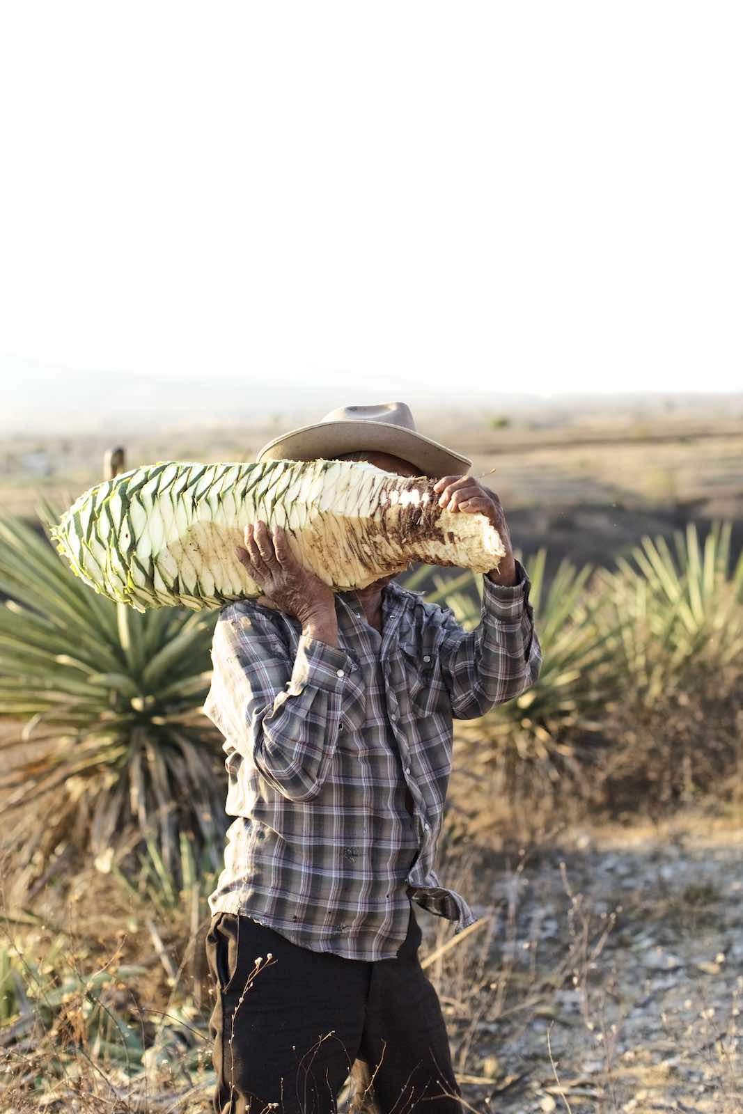 Jody Horton Photography - Farmer carrying a freshly cut piña.