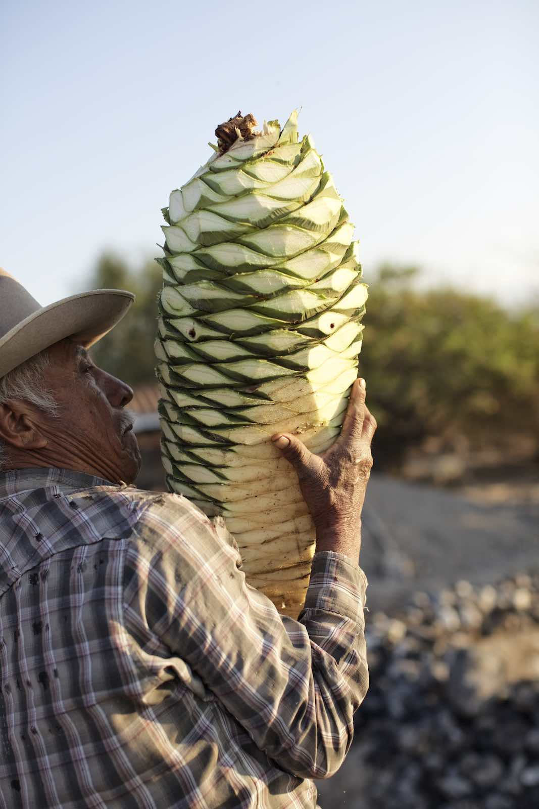 Jody Horton Photography - Farmer carrying freshly cut piña.