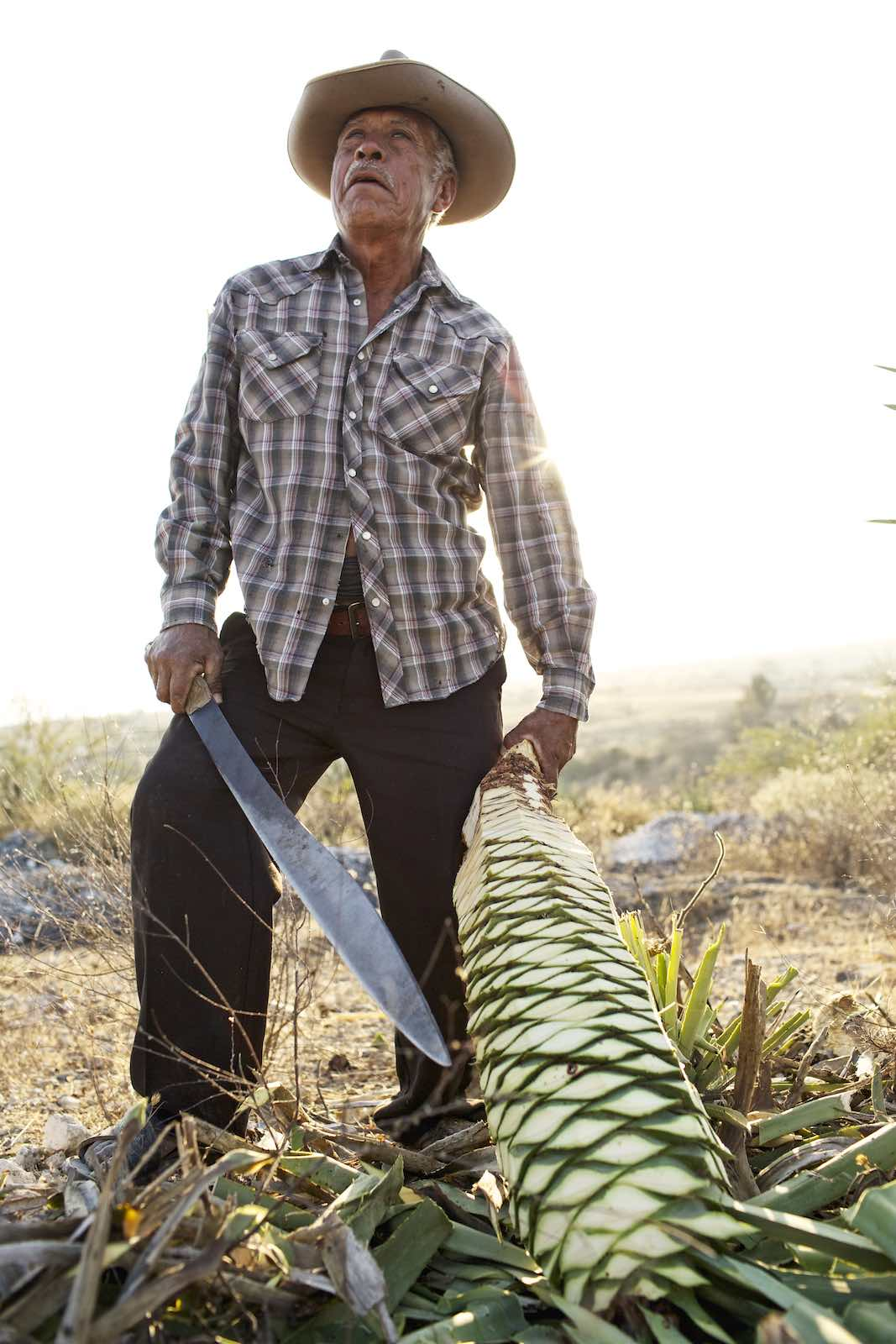 Jody Horton Photography - Farmer with agave plant and machete.