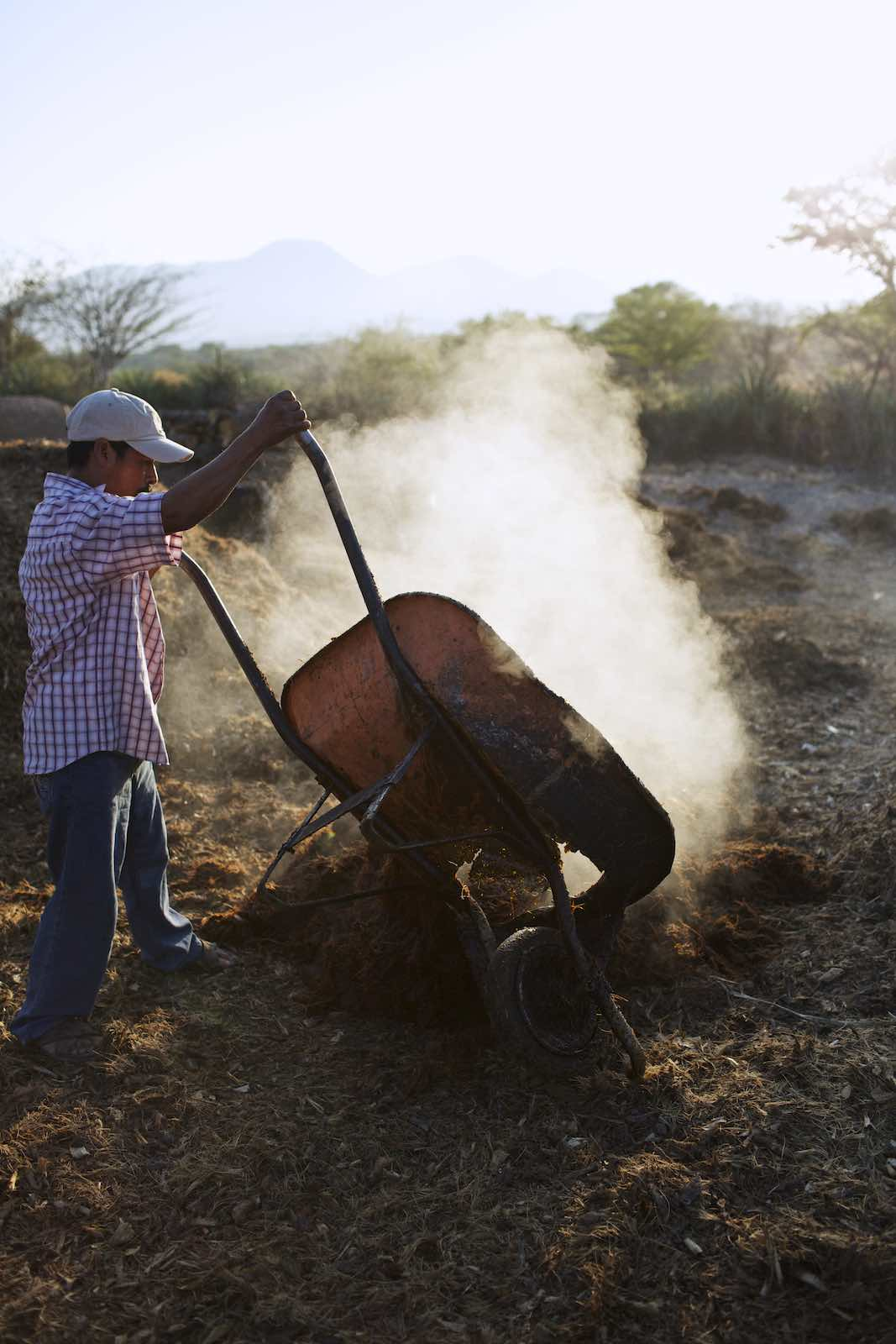 Farmer dumping wheel barrel of agave fibers.