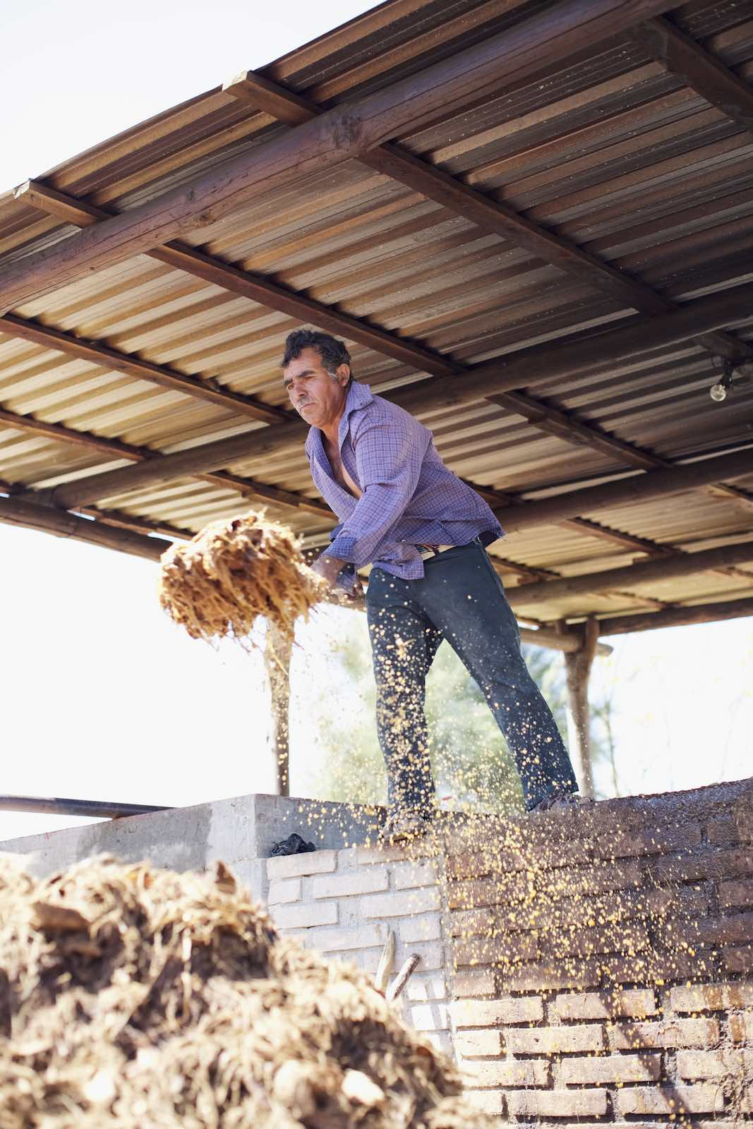 Jody Horton Photography - Farmer piling used agave fibers.