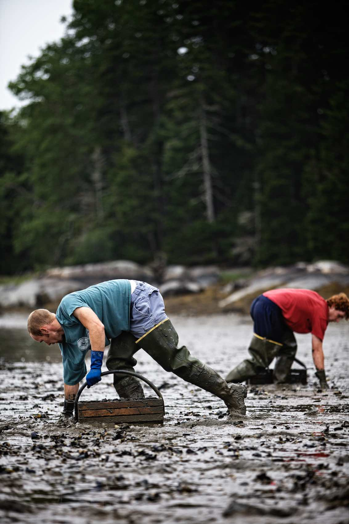 Jody Horton Photography -  Clam hunting in Maine.