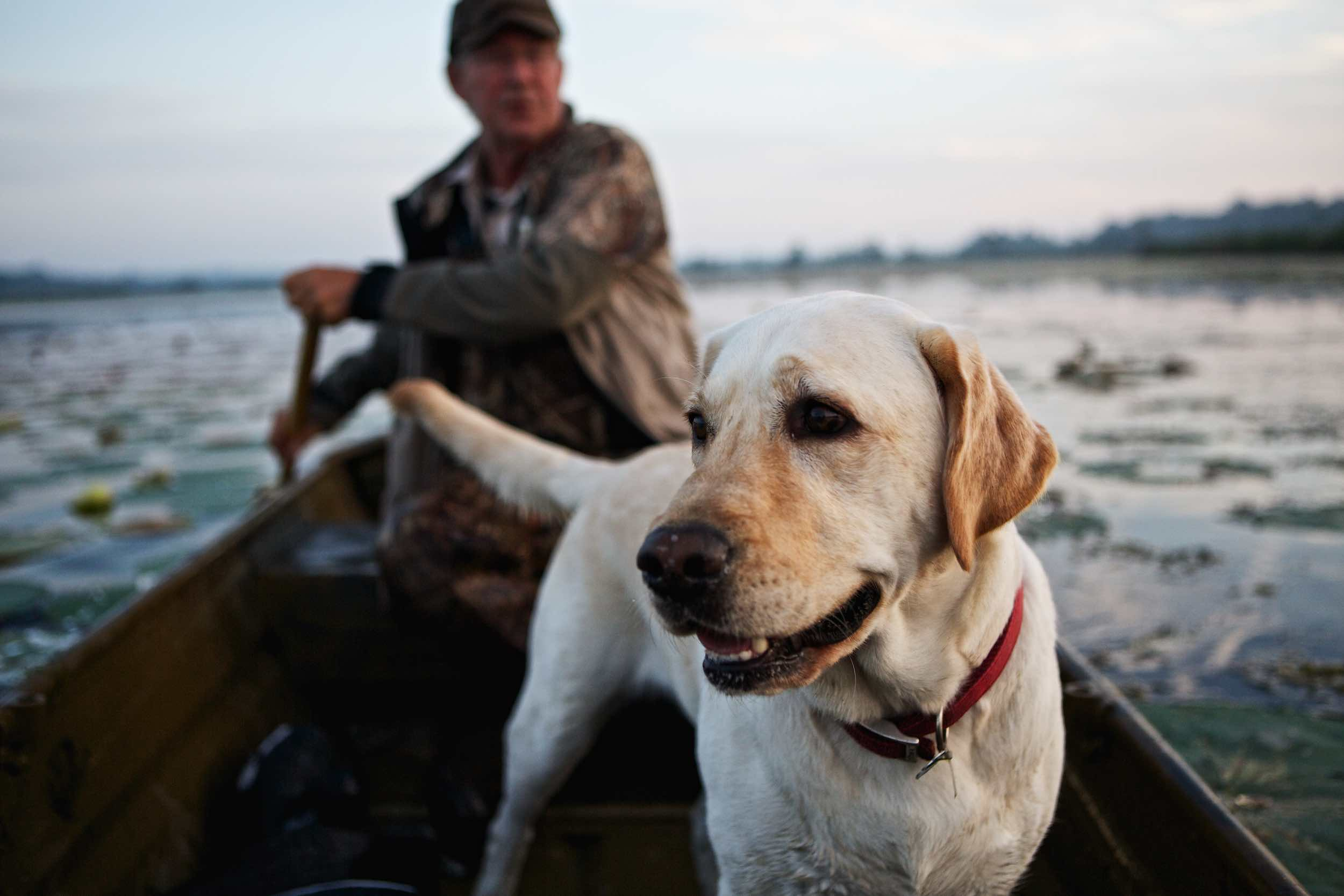 Jody Horton Photography - White lab in canoe on the water, shot for Jack Daniels Single Barrel.