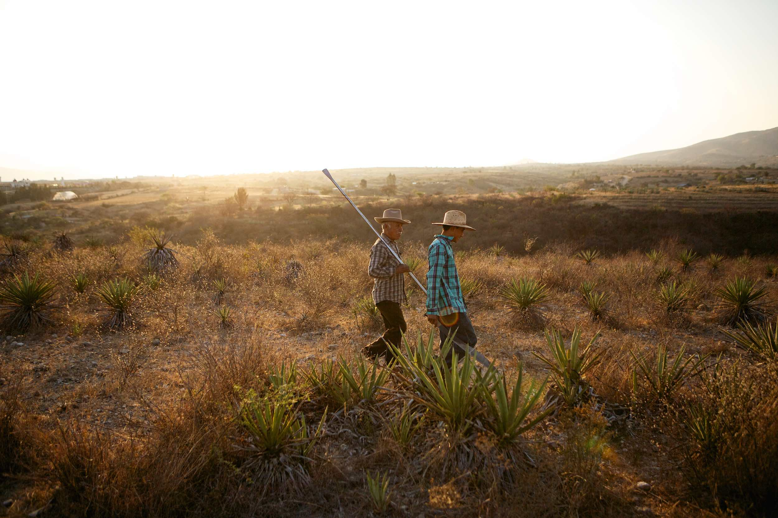 Jody Horton Photography - Mezcal farmers walking during agave harvest, shot for Garden & Gun.