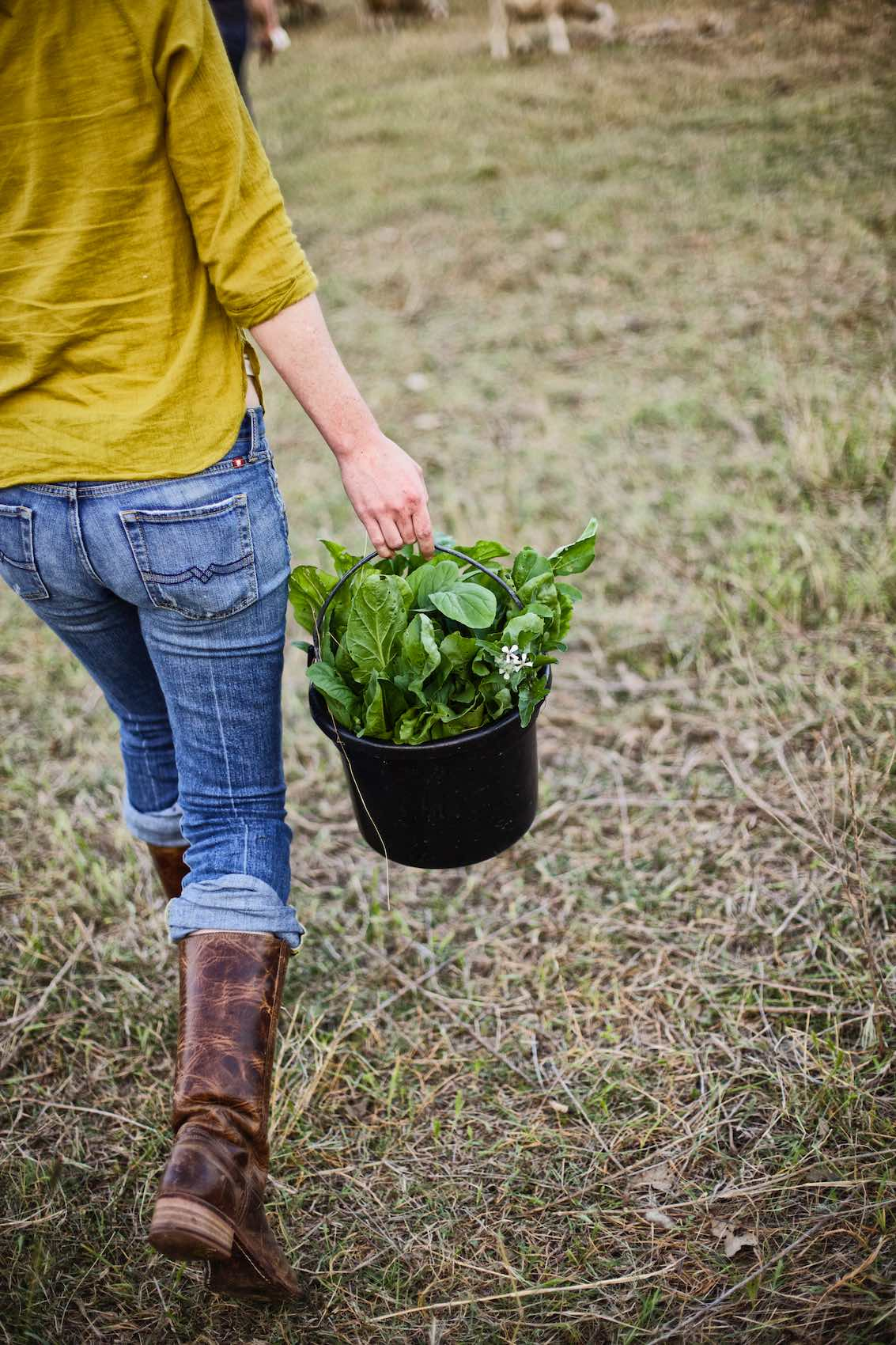 Jody Horton Photography - Farmer carrying fresh greens in a black bucket.