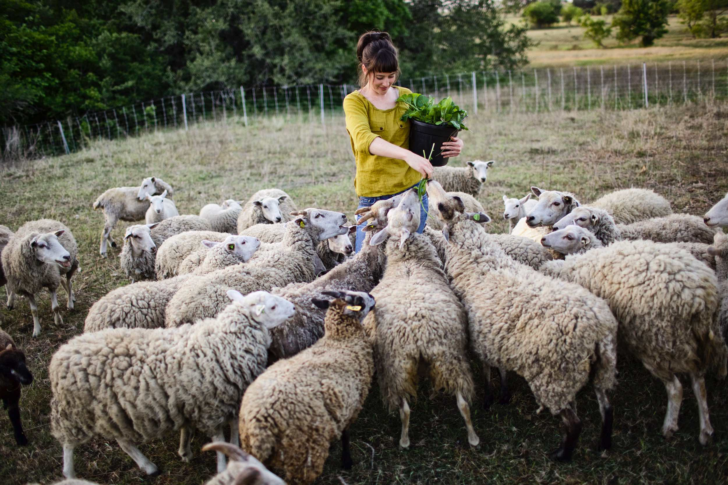 Jody Horton Photography - Farmer feeding greens to sheep.