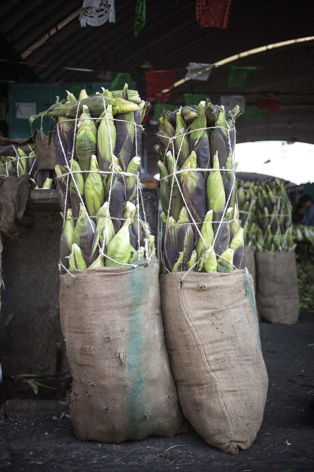 Ears of corn tied in burlap sacks and placed on the floor of the market.