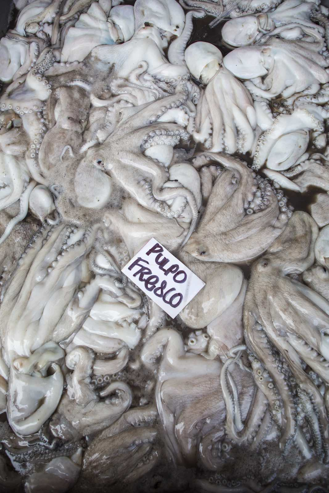 Jody Horton Photography - Fresh caught octopi in the Mexico food market.
