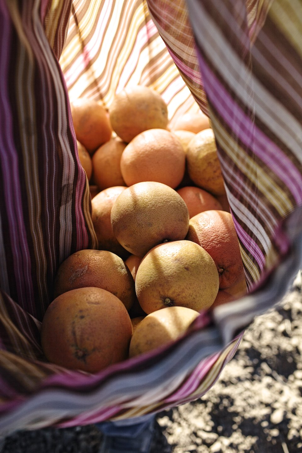 Freshly picked oranges gathered in a multihued, striped sack.