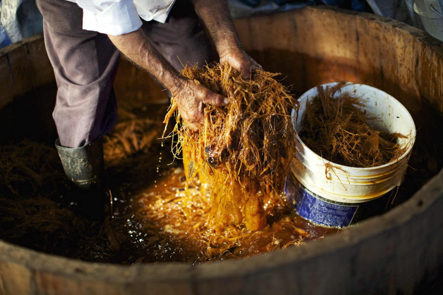 Farmer handling soaked agave fibers in a wood barrel.