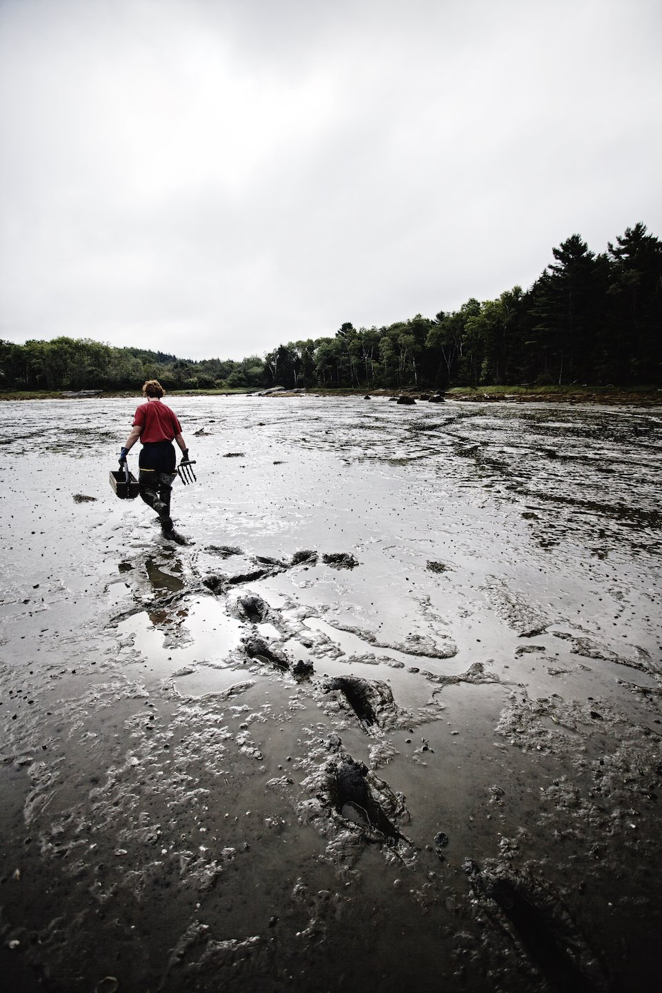 Fisherman walking through a mud flat where clams are found.