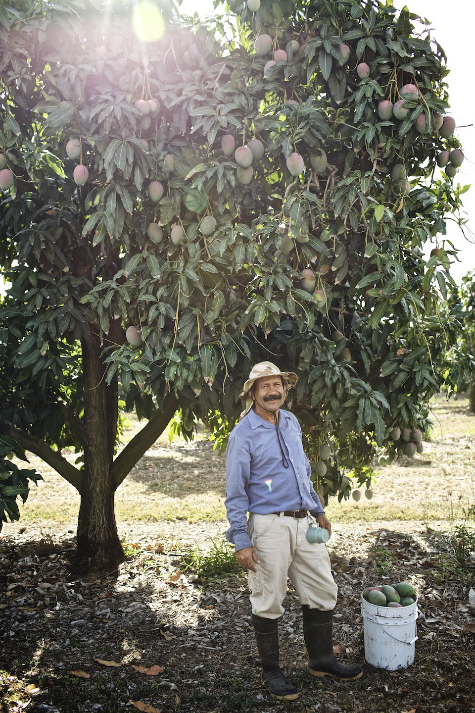 Farmer standing by a mango tree with a bucket carrying his latest harvest.