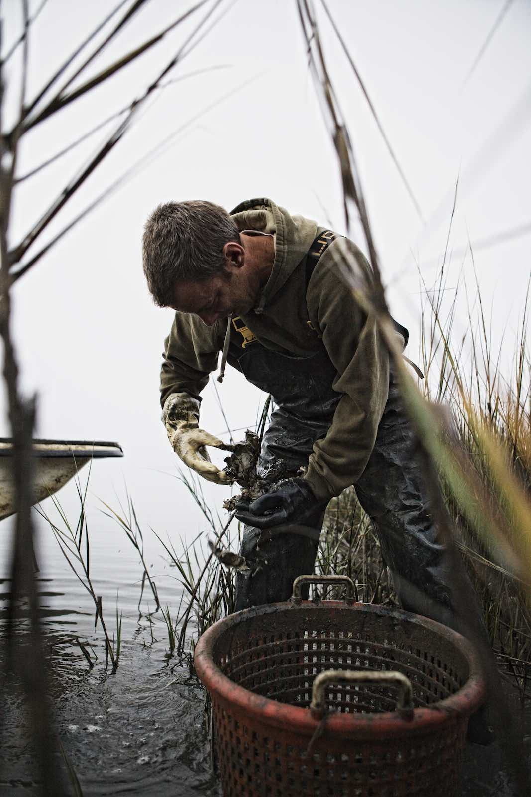 Jody Horton Photography - Fisherman grappling with fresh caught oysters.
