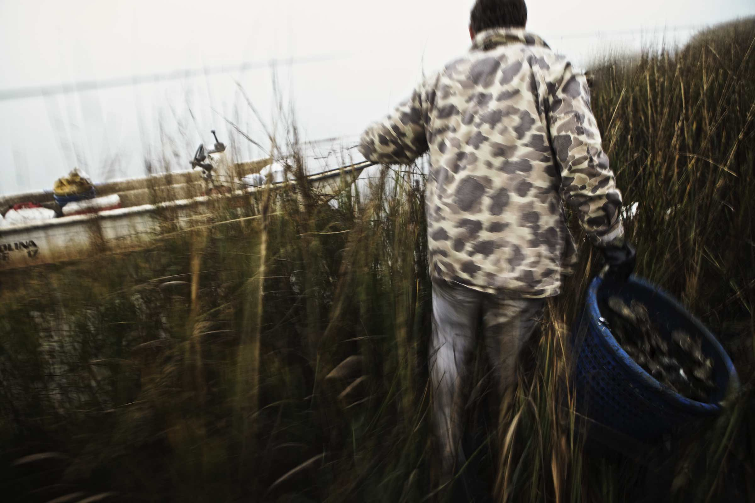 Fisherman carrying oyster haul through tall marsh grasses.