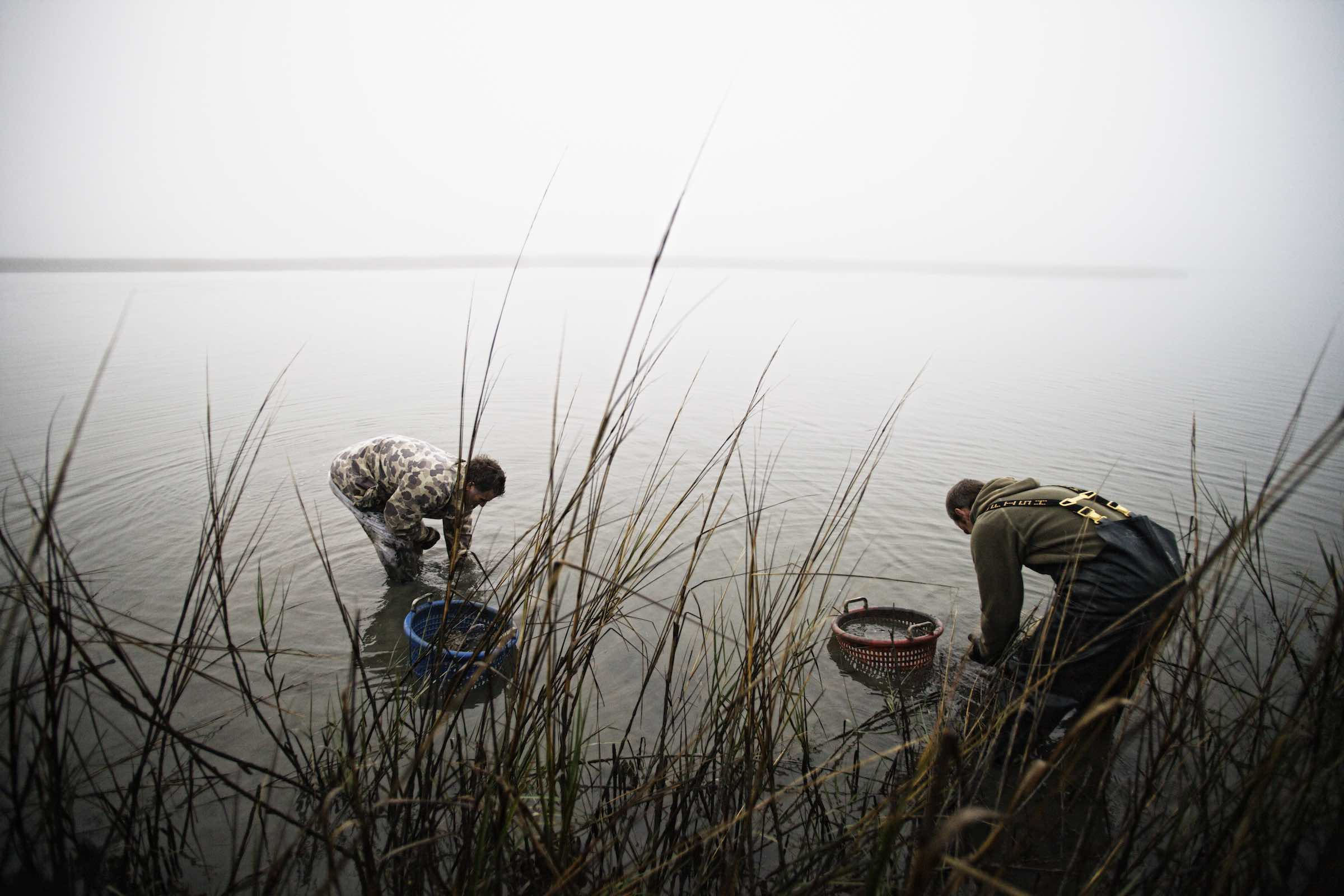 oyster_harvest_photography-06