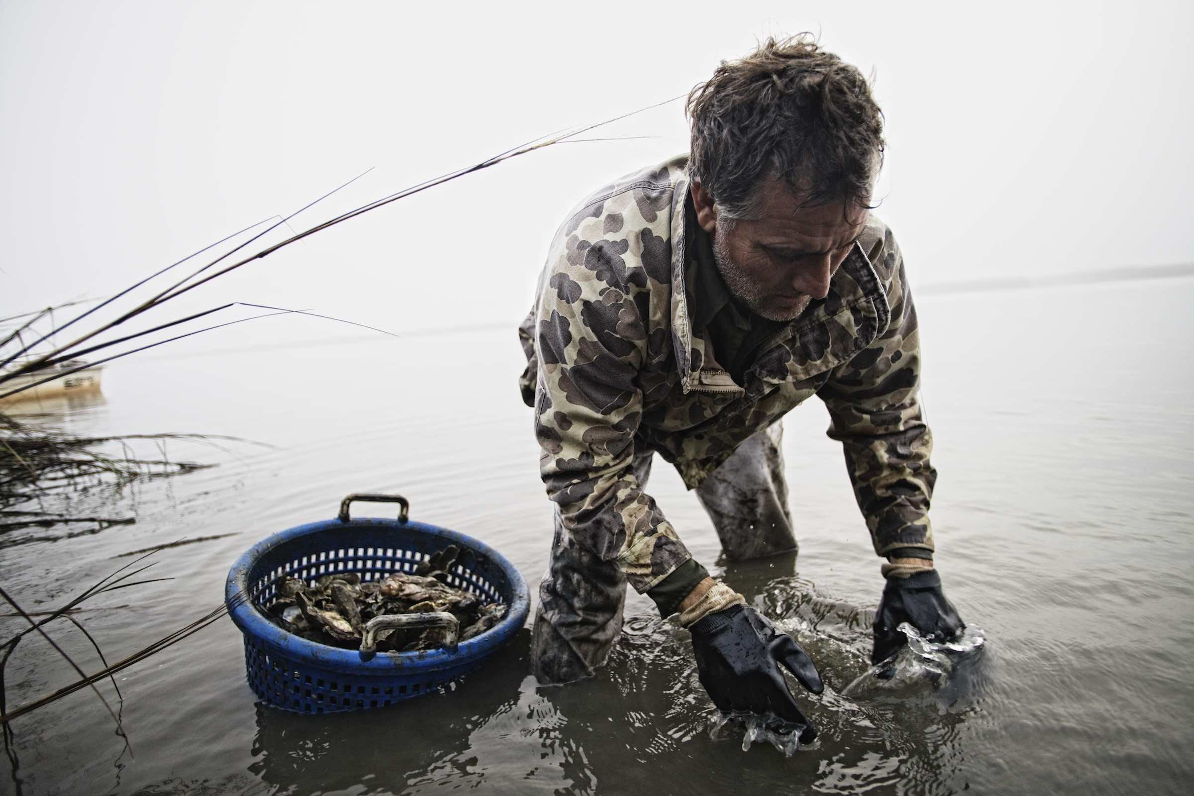 Fisherman and his basket of oysters in shallow water.