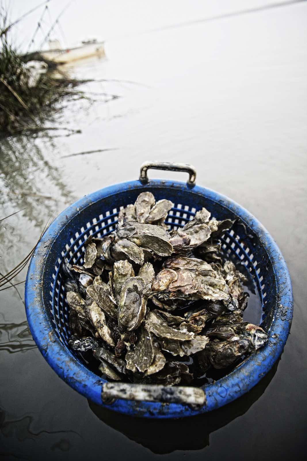 oyster_harvest_photography-13