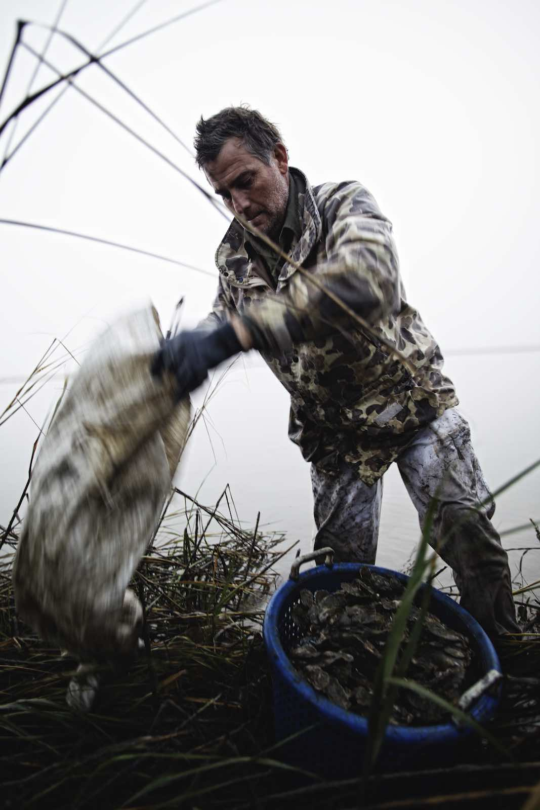 Fisherman and basket of oysters during oyster harvest.