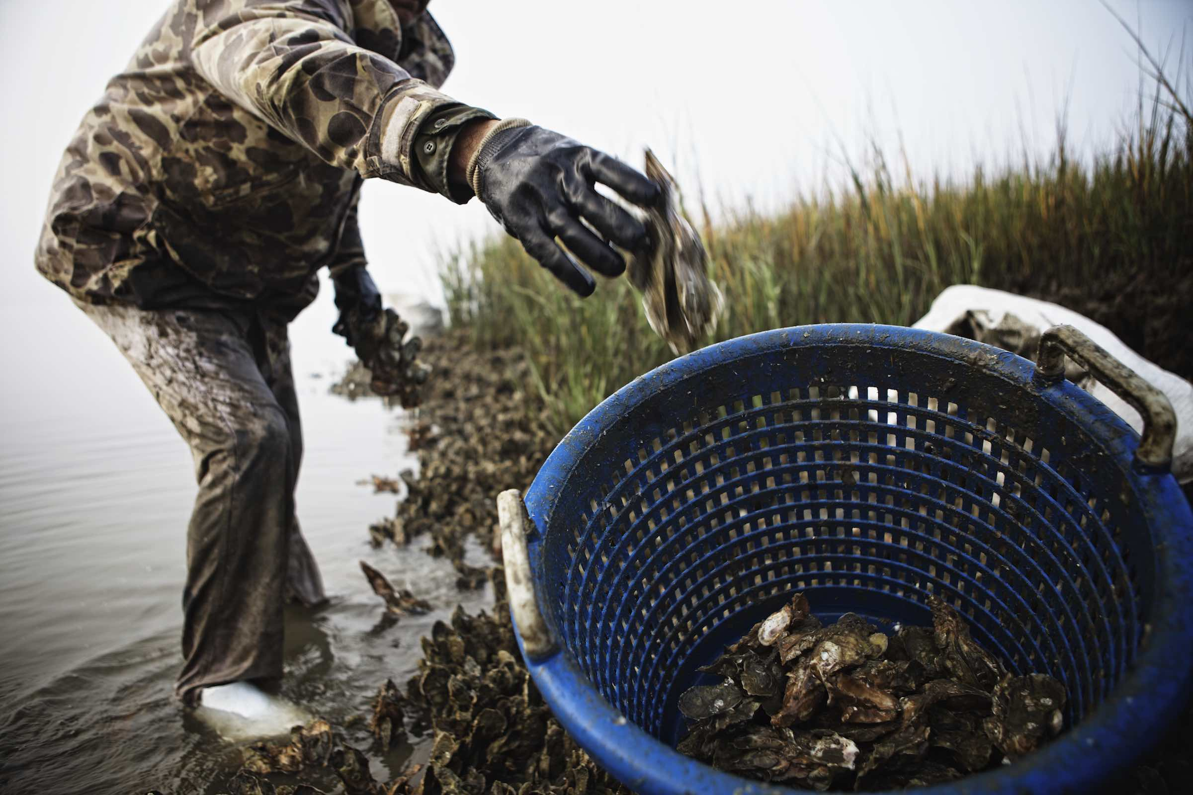 Jody Horton Photography - Fisherman tossing fresh caught oysters into a blue basket.