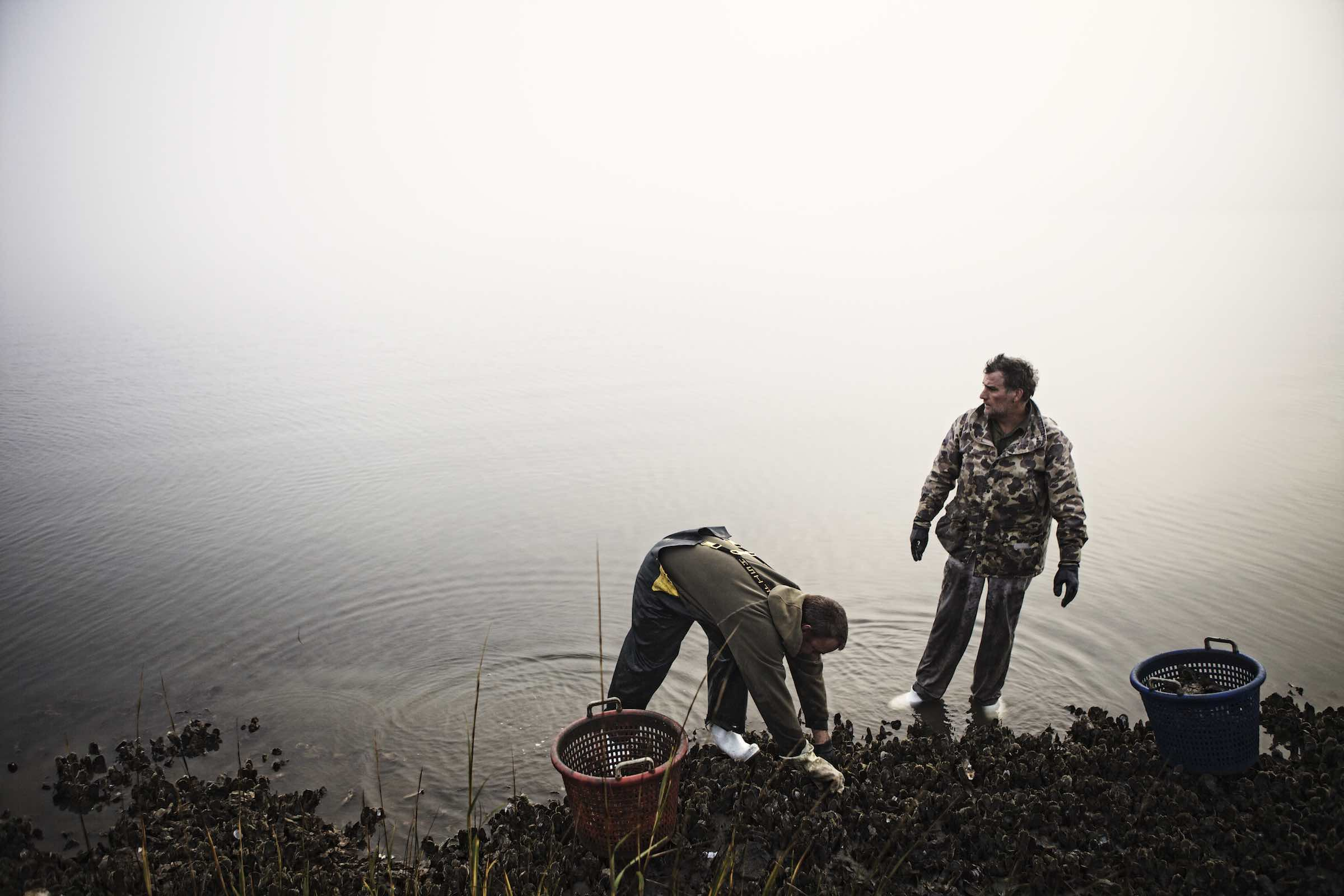 Jody Horton Photography - Fishermen standing in shallow water during oyster harvest.