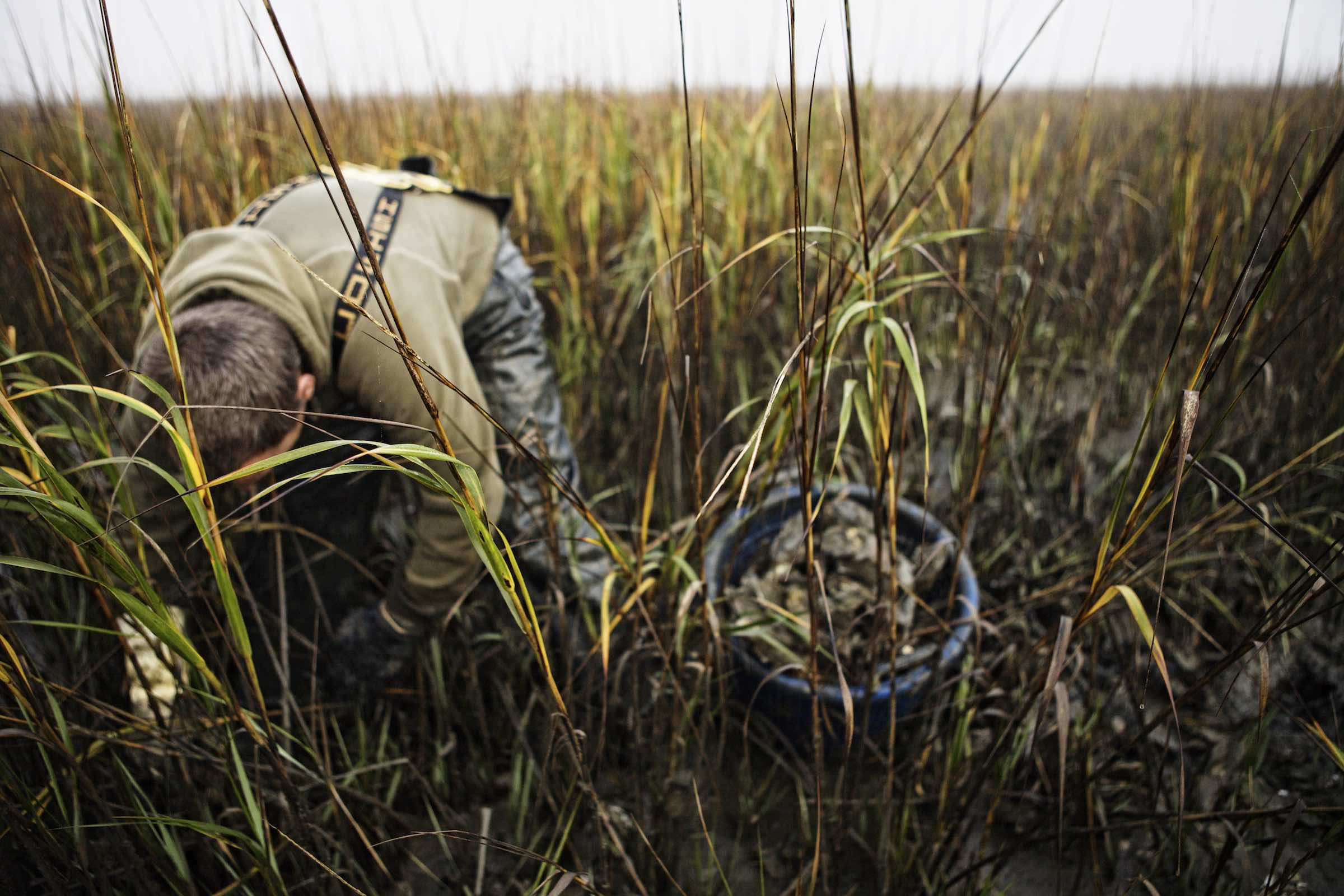 Jody Horton Photography - Fisherman harvesting oysters in tall grass.