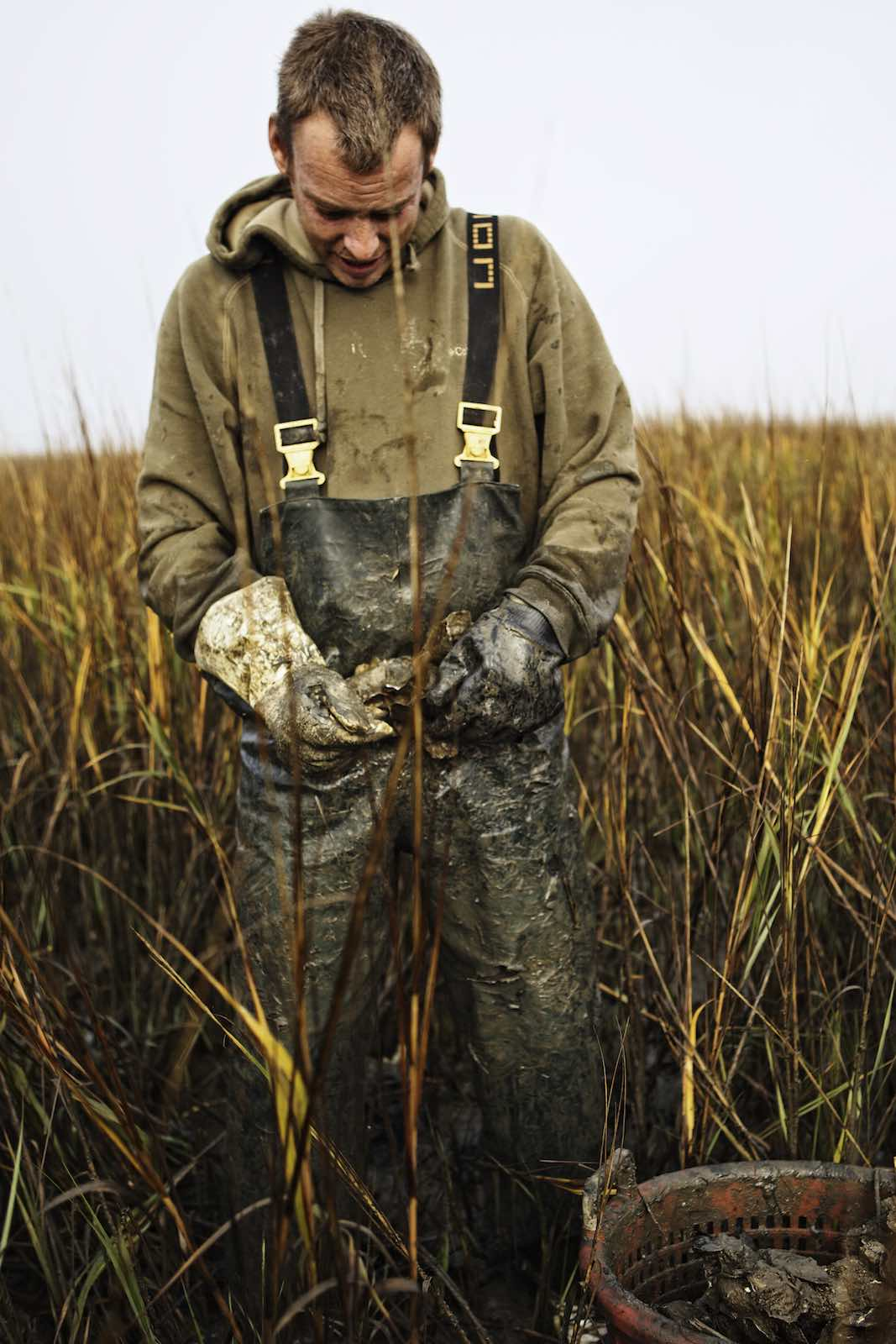 Fisherman standing in marsh grass collecting oysters.